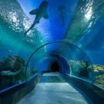 Top Aquariums in New England